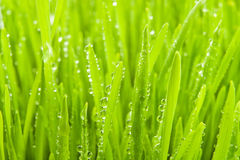 Dew on grass. Full frame closeup Royalty Free Stock Photos