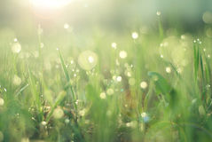 Dew on grass. With shallow depth of field Royalty Free Stock Photos