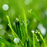 Dew and grass Royalty Free Stock Photography
