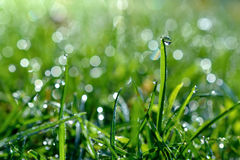 Dew and grass Stock Image