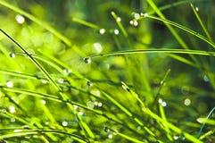 dew grass Στοκ Εικόνες