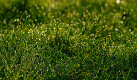 Dew on grass Royalty Free Stock Photography