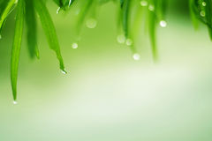 Dew grass Stock Images