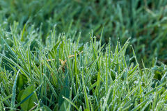 Dew on Grass. During April early morning Stock Photos