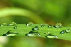 Dew on the grass. Beautiful natural colored background. Morning time in nature. Stock Image