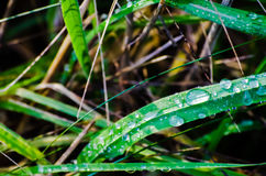 Dew on Grass Closeup Stock Images