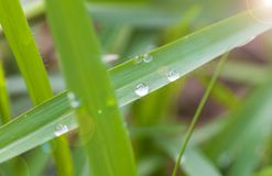 Dew on the grass. In the morning Stock Photo