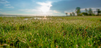 Dew on grass. Dew drops on blades of grass in bright morning sunlight Stock Photos