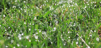 Dew on the grass Stock Photos