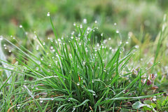 Dew on the grass Stock Images