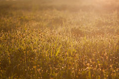 Dew on the grass, drops on the green grass, warm sunshine Stock Photos