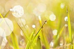 Dew on  grass Stock Photos