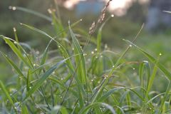Dew on the grass early in the morning stock images
