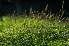 The dew on grass field in the morning stock image