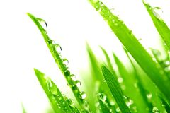 Dew on a grass Stock Photo