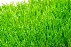 Dew on a grass Stock Photography