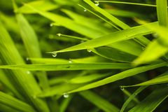 Dew on the grass. Dew on the green grass Stock Photography