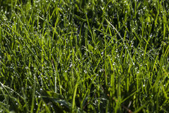 Dew on the grass Royalty Free Stock Photography