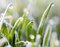 Dew on the grass with hoarfrost.  Stock Image