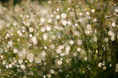 Dew on the grass. Light, blur, light, pipes and dripping water, grass, light, bright, golden, backdrop Royalty Free Stock Photo
