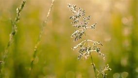 Dew on the Grass. Macro Stock Photos