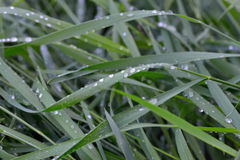 The dew on the grass Stock Photography