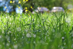 Dew on the grass. Morning dew on the grass Stock Images