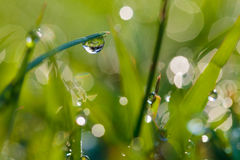 Dew on the grass. Royalty Free Stock Image