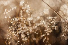 Dew on the grass in morning sunshine Royalty Free Stock Images