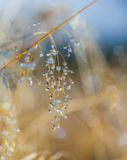 Dew on the grass in morning sunshine Stock Photos