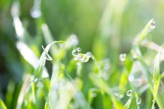 Dew on the grass in nature . In the park in nature Stock Photo