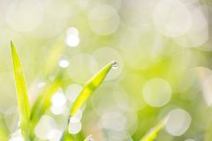 Dew on the grass in nature. In the park in nature Stock Photography