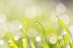 Dew on the grass in nature Royalty Free Stock Photos