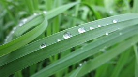 Dew grass nature morning fog freshness royalty free stock photography