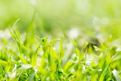 Dew on the grass in nature . In the park in nature Stock Image