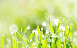 Dew on the grass in nature. In the park in nature Stock Images