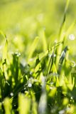 Dew on the grass in nature Royalty Free Stock Images