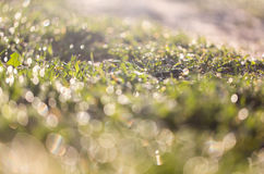 Dew on the grass Royalty Free Stock Photos
