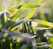 Dew on the grass Royalty Free Stock Image