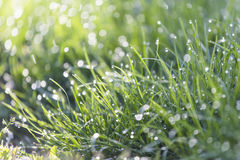 Dew on grass Stock Photos