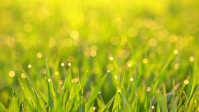 Dew on the grass in the sun rays. Seamless loop stock video