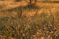Dew on the grass in the sunlight close up Royalty Free Stock Images