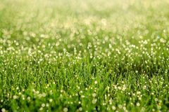 Dew on the grass. Sunny abstract green nature background. Stock Image