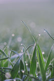 Dew on grass on a sunny Spring morning Stock Photo