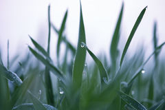 Dew on grass on a sunny Spring morning Royalty Free Stock Photos