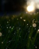 Dew on grass. With sunrise in background Royalty Free Stock Images