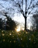 Dew on grass. With sunrise in background Stock Images