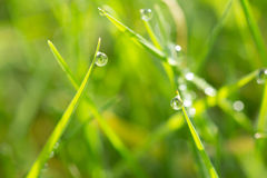 Dew on the grass Royalty Free Stock Images