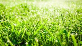 Dew grass wallpaper Stock Image