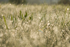 Dew in the grass Stock Image